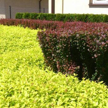 ogrody-przydomowe--12
