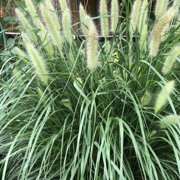 trawy-1-1