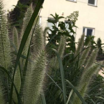 trawy-1-10