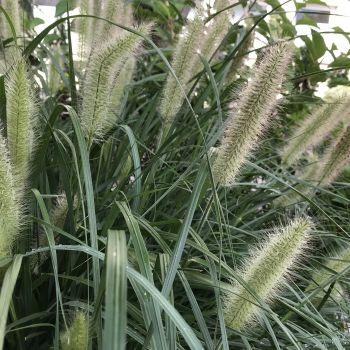 trawy-1-12